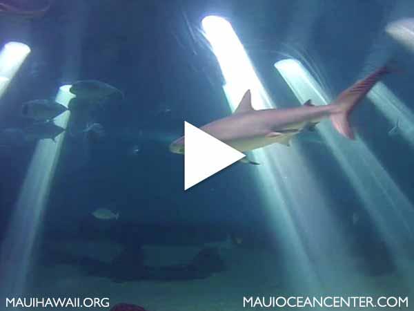 Maui Ocean Center webcam